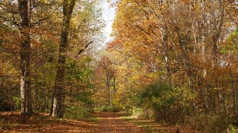 Learn all about the fall foliage season.