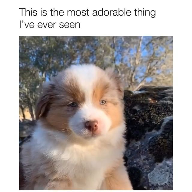 Photo of I just want to cuddle with this puppy 😍