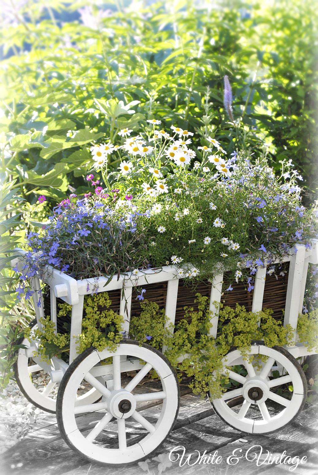 vintage garten bollerwagen mit blumen bepflanzen