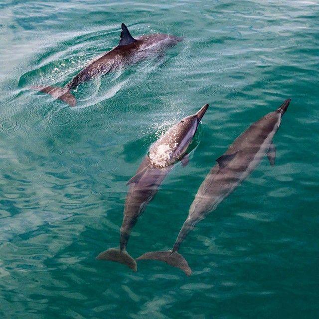 Dolphin spotting along Kauai's Na Pali Coast. Photo courtesy of wanderlustersuk on Instagram.