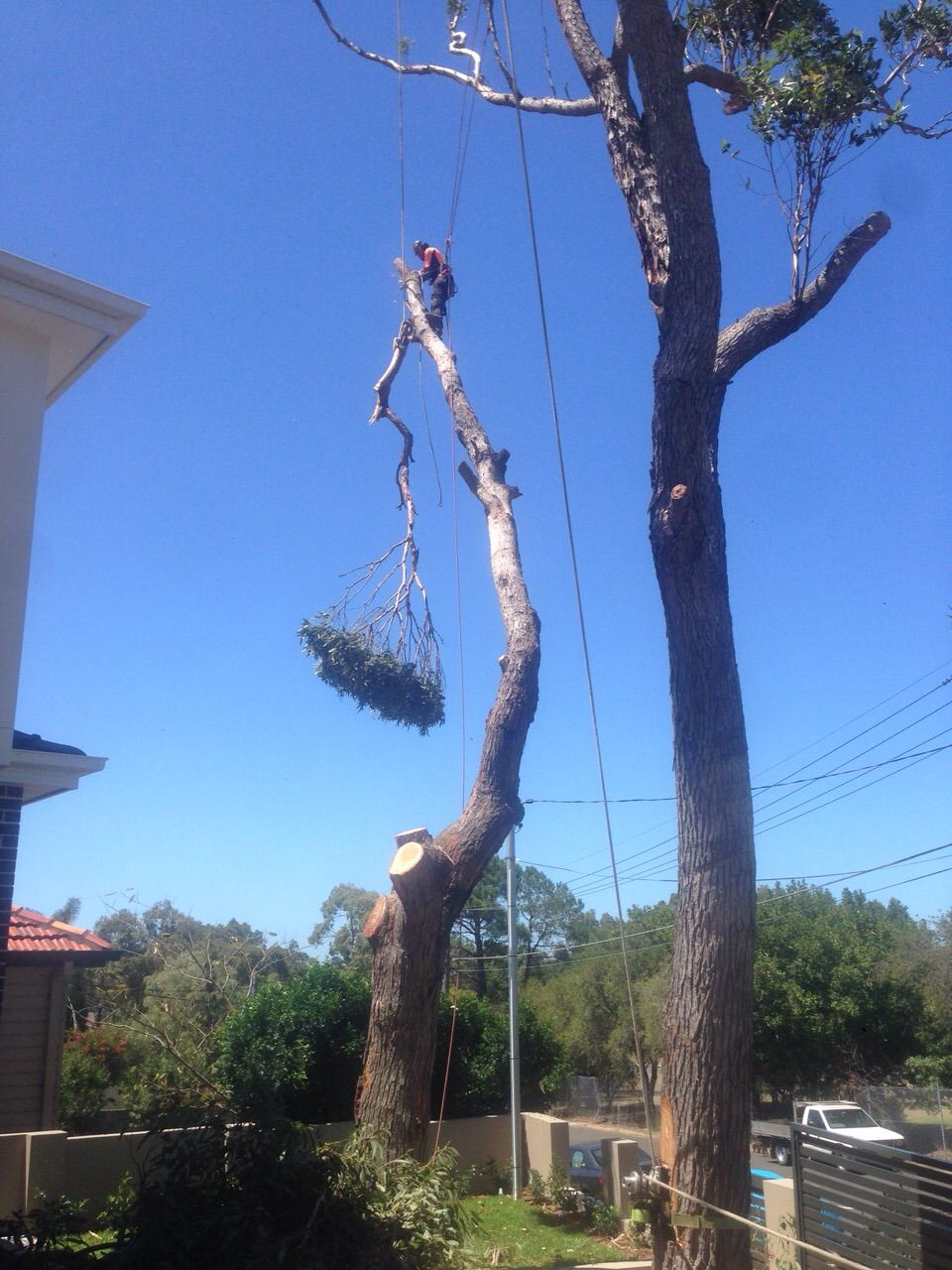 Pin on Tree Services