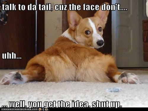 Warning Corgi Corgi Butts Corgi Dog