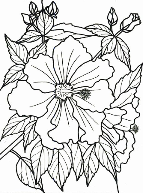 Flower Coloring Activity Book Adults Dementia 1 Jpg 594 800 Flower Coloring Pages Coloring Pages Easy Coloring Pages