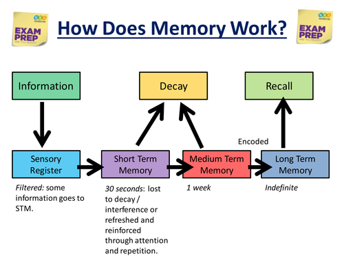 how to convert short term memory to long term