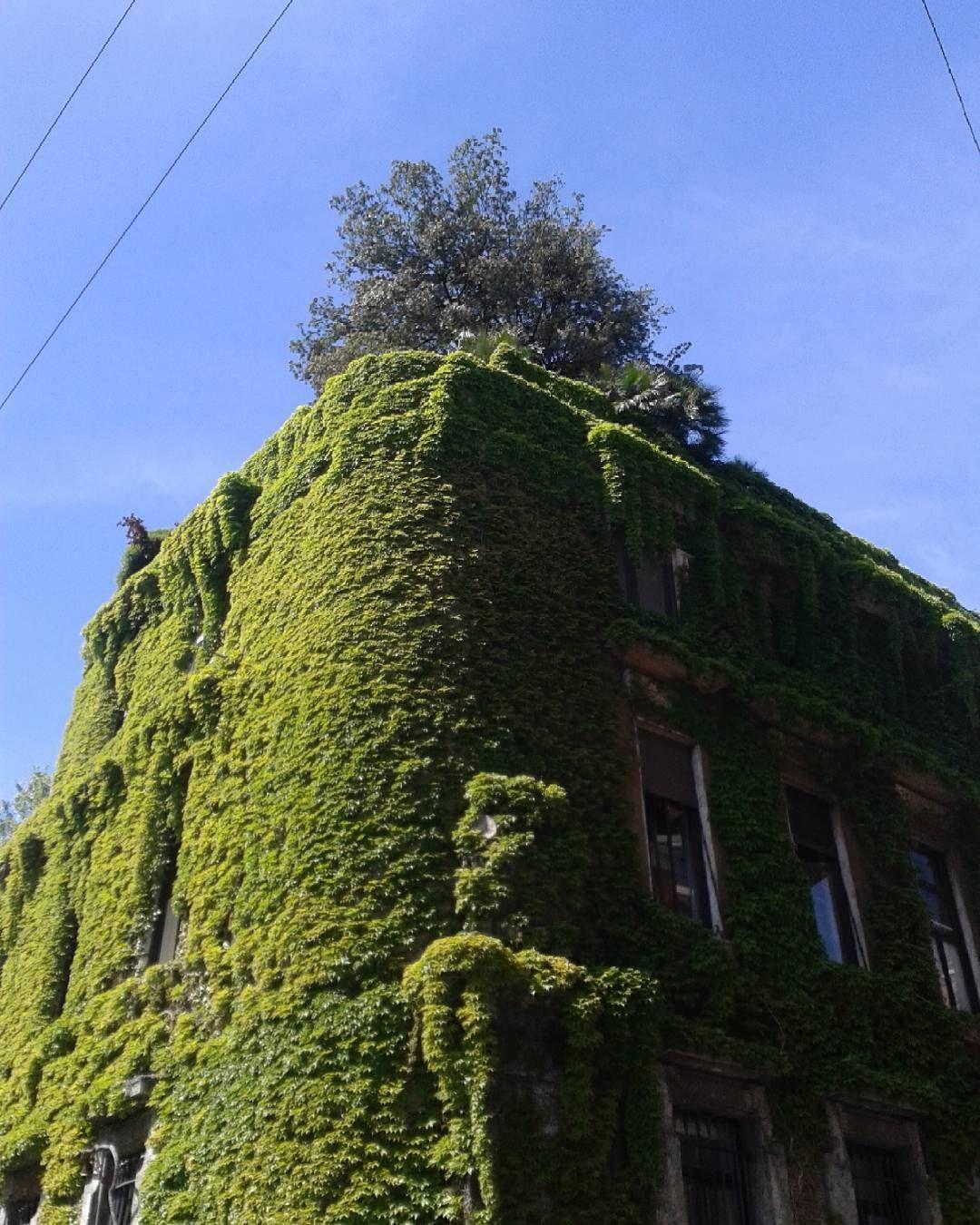 Via mozart una delle case d 39 edera pi belle di milano for Case ricoperte di edera
