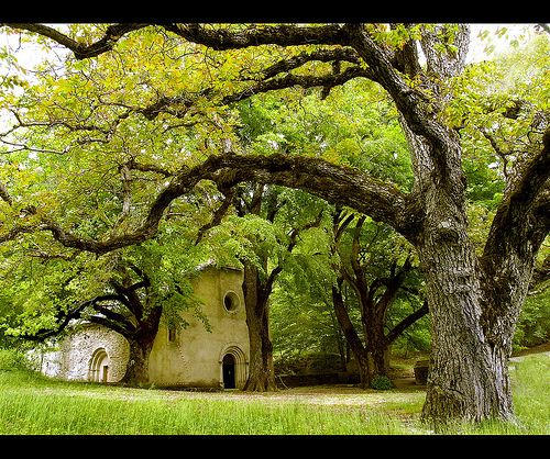 treeroots: Chapelle de Lure by dubusregis