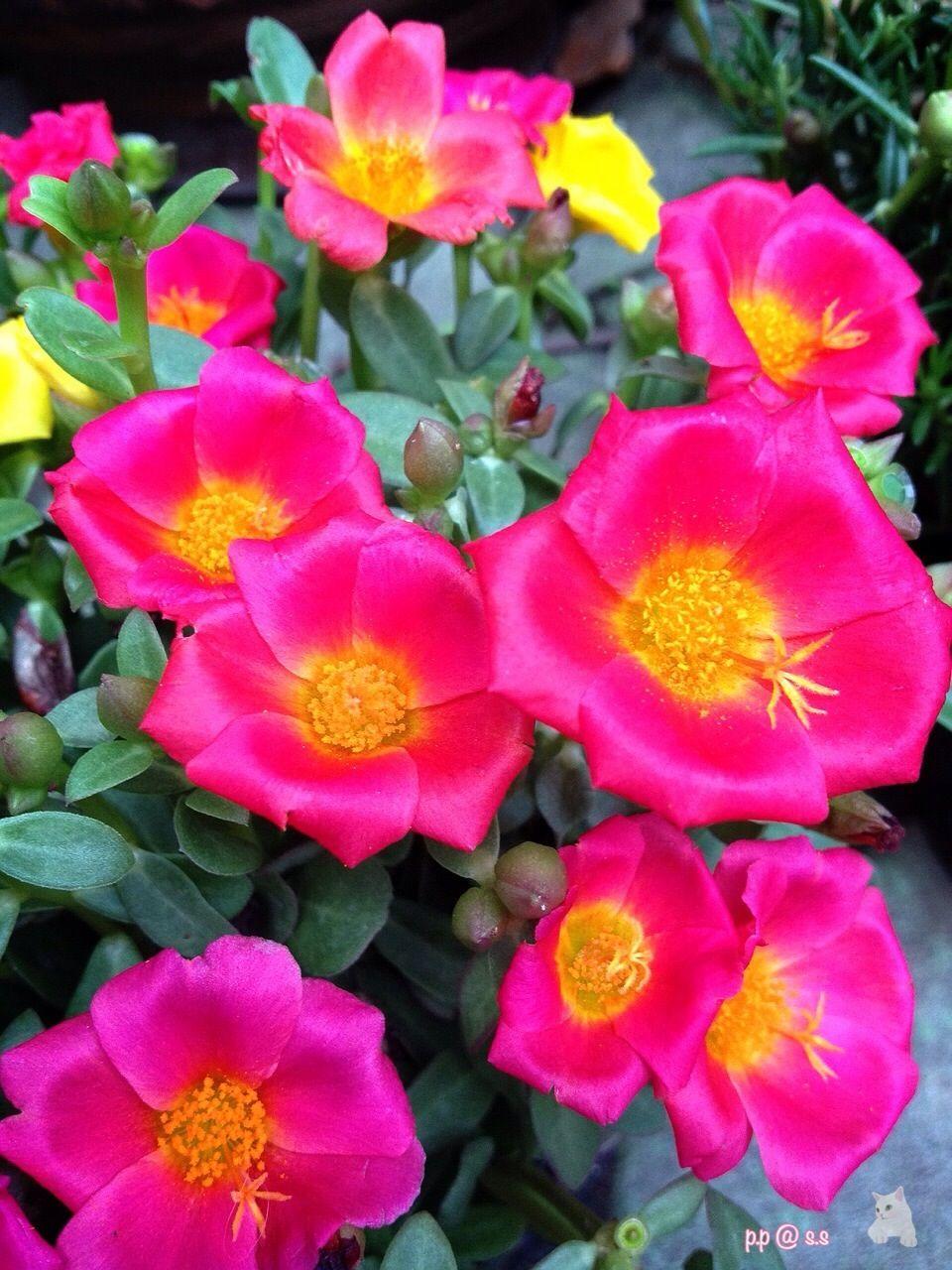Shocking Pink Flower The Garden And Plants Flower Florist