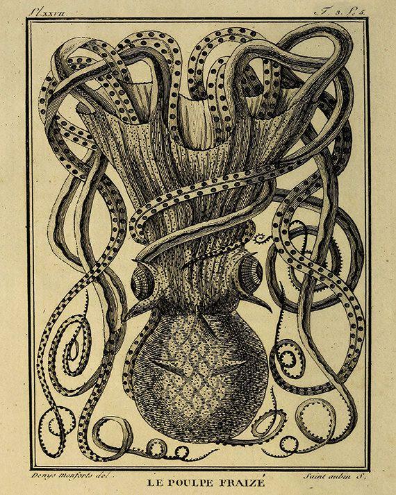 Octopus Art Print Old Prints Nautical Art Print Ocean Decor Natural History Victorian Art Antique Prints Nature Prin Octopus Art Print Octopus Art Nautical Art