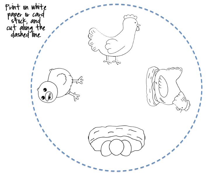 free Life Cycle of a chicken coloring   Projects to Try   Pinterest ...