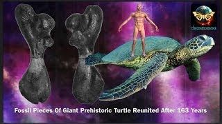 Fossil Pieces Of Giant Prehistoric Turtle Reunited After 163 Years