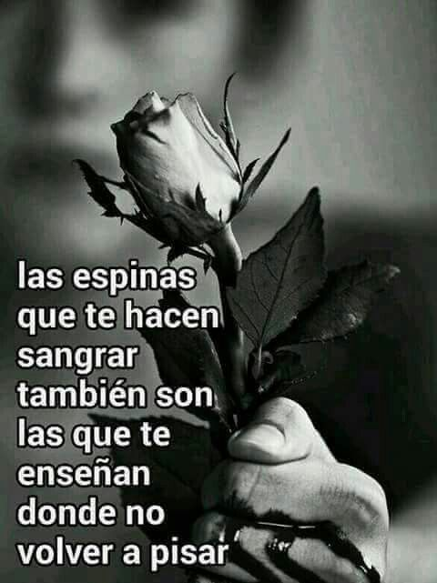 Pin By Deliaris Lara On Frases Para Reflecionar Rose Blood