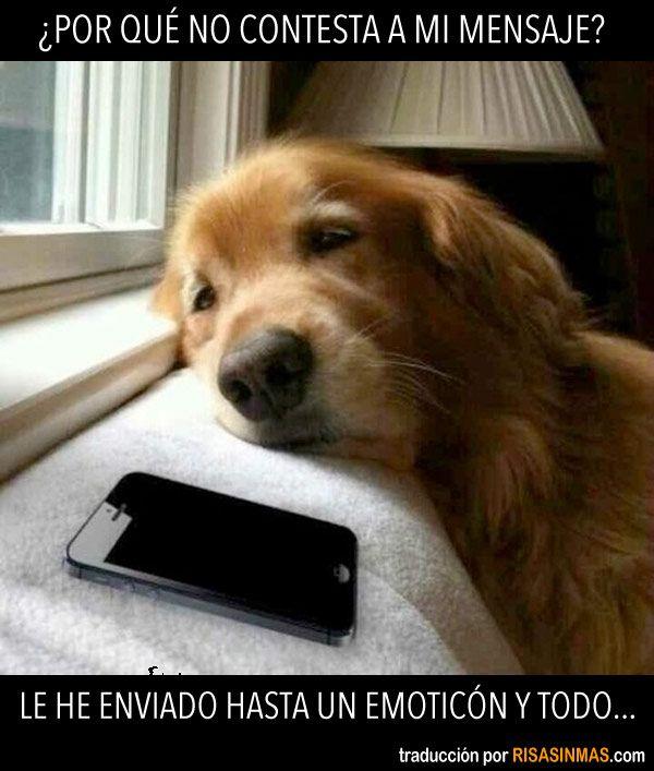Por Que No Contesta A Mi Mensaje Baby Dogs Dogs Funny Dogs