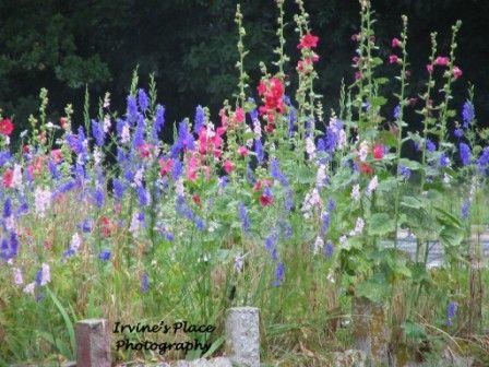 Flower gardenPhoto by Rachael Irvine, Irvine's Place Photography.