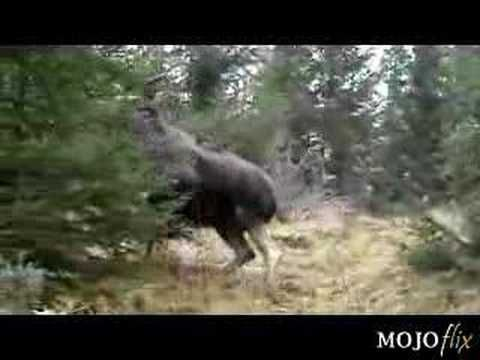 Holy Big Moose - Just wait for it - YouTube this would be an oh sh** moment     can tell the dog is upset at something but had no idea what