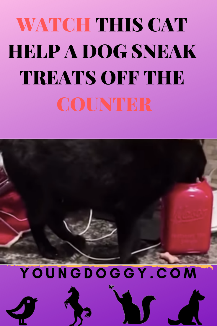 WATCH THIS CAT HELP A DOG SNEAK TREATS OFF THE COUNTER | Dogs and
