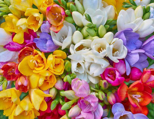 Pin On Jaimie Flowers