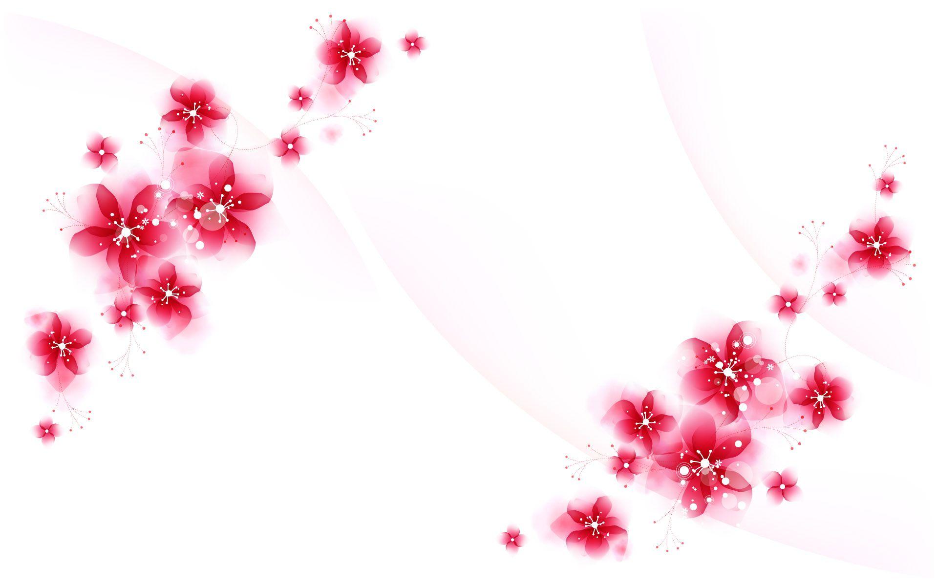 Flower White Background Hd