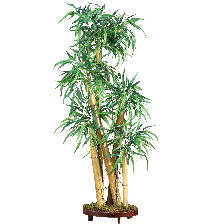 42 Chinese Bamboo Plant Bamboo Plants Chinese Bamboo Tree