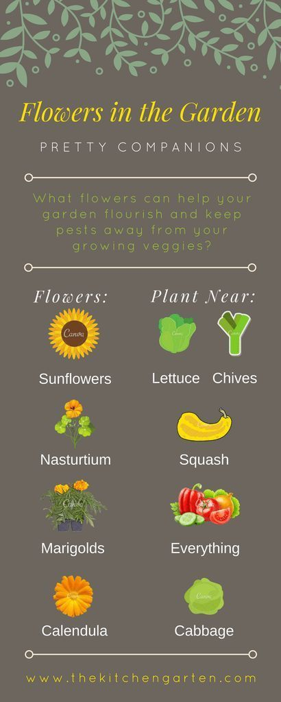 The Best Flowers for Vegetable Gardens is part of Fall garden vegetables, Home vegetable garden, Organic vegetable garden, Beautiful flowers garden, Veggie garden, Organic gardening tips - Add color and purpose to your vegetable garden this year with beautiful blooms!
