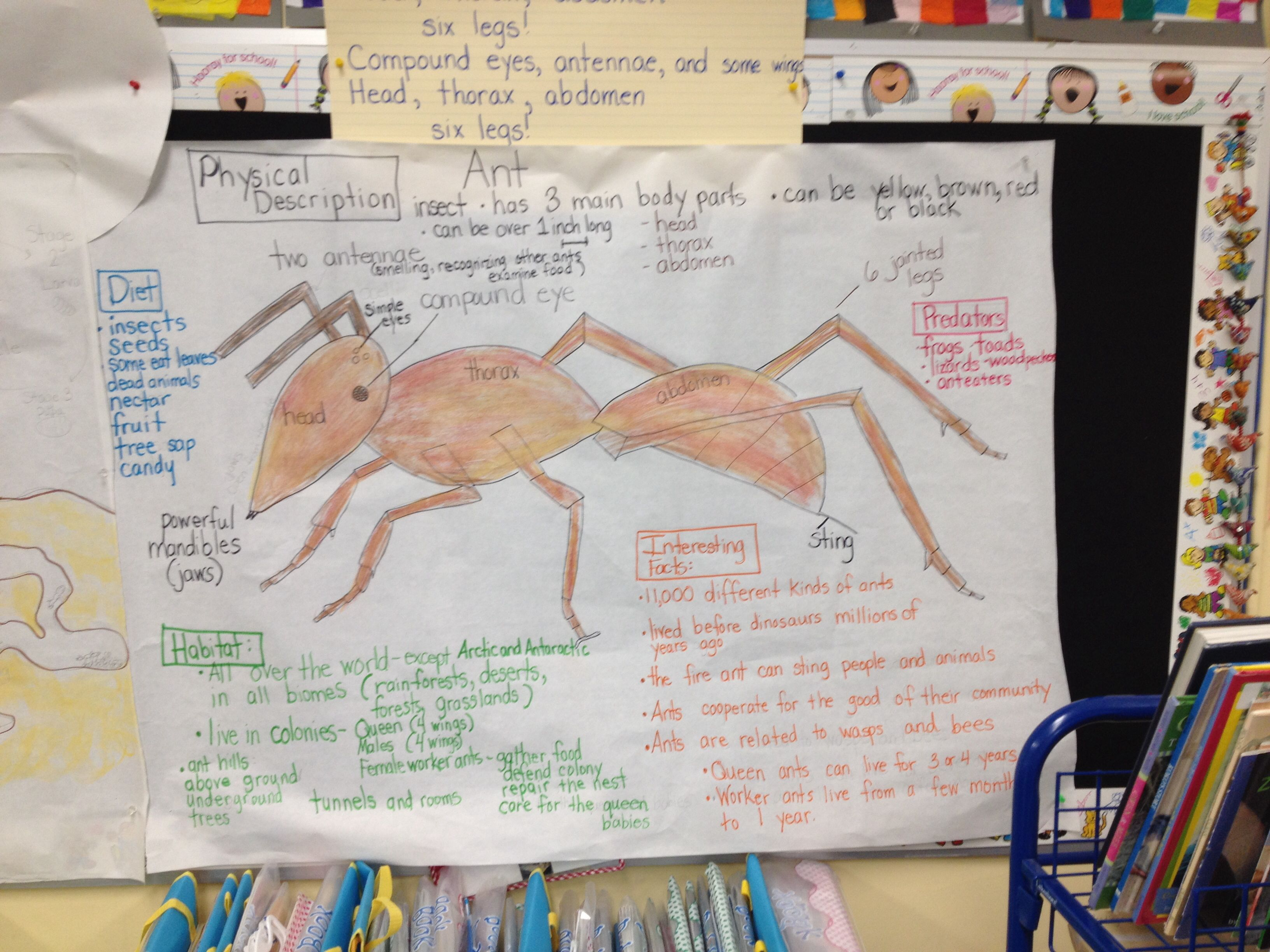 Ant Glad Pictorial Input Chart