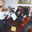 Amadeus String Ensembles/Quartets in Denver