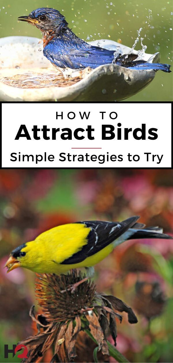 The ULTIMATE Guide to Attracting Birds To Your Yard! in ...
