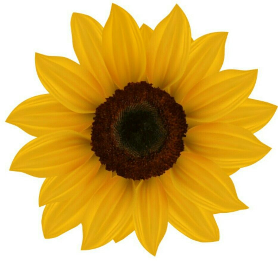 Pin By Funny On Blumen Tiere Natur Sunflower Png Sunflower Images Sunflower Clipart