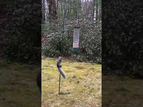 Squirrel Gets Wild Ride Spinning Bird Feeder