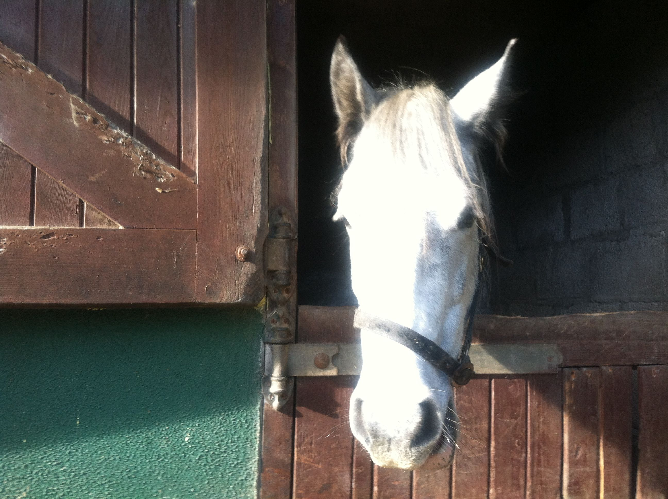 Sweetest horse you will ever meet.. Its like she understood everything I said..