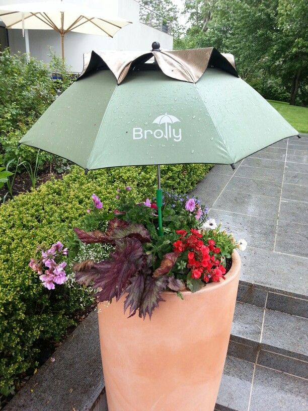 Protect Your Plants This Rainy Memorial Day Weekend Dont Let The Constant Rain Waterlog