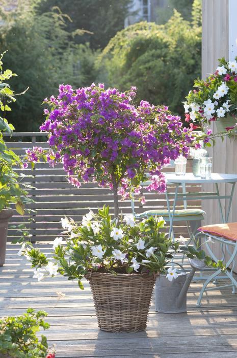 Galeria Zdjec Kwiaty Na Balkonie Zdjecie Nr 7 Urzadzamy Pl Plants