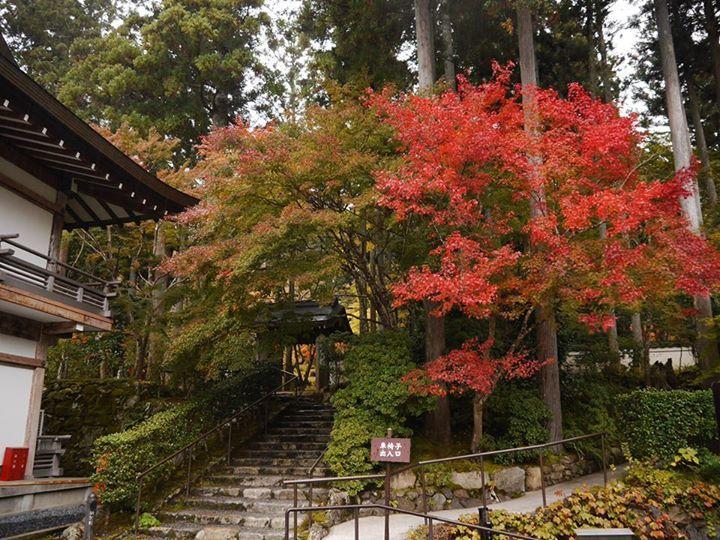 Japaninfo shared 京都大原三千院's photo.