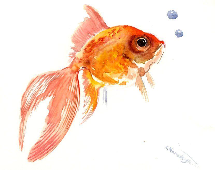 Goldfish Original Watercolor Painting 8 X 10 In Aquarium Fish