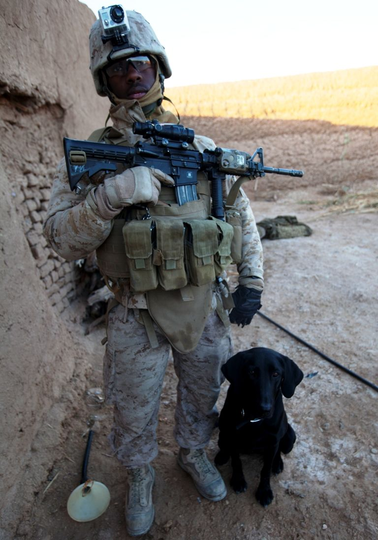 Are Military Dogs Equipment