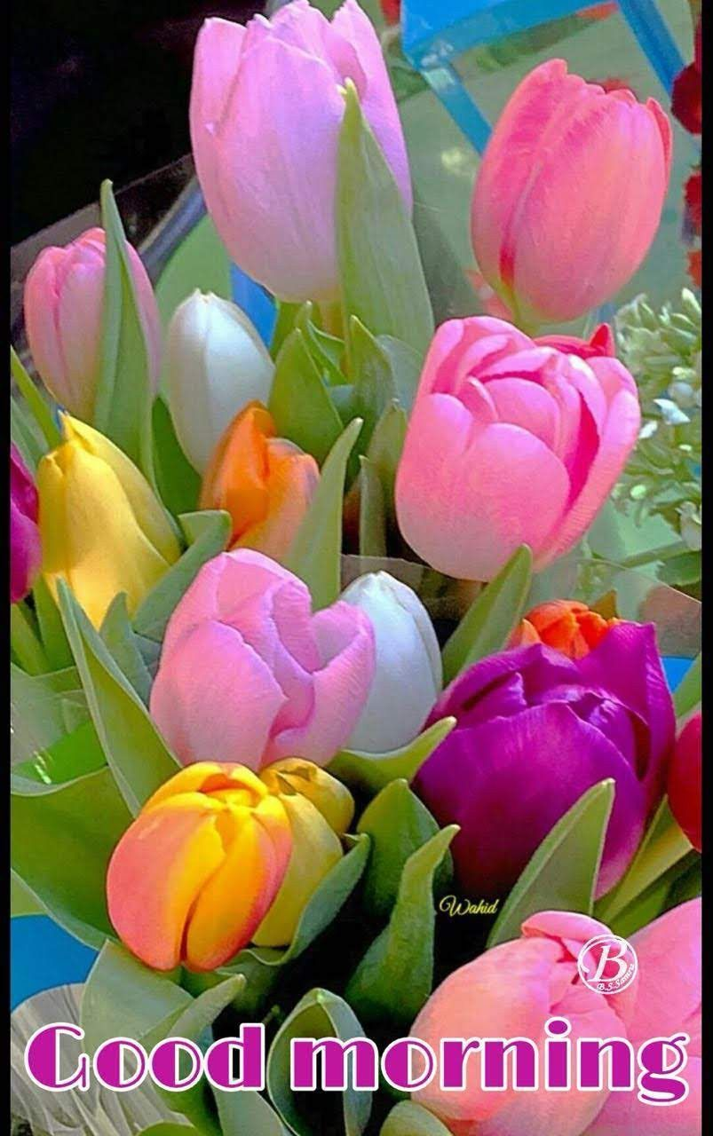 Pin by amr elshimy on good morning pinterest flowers tulips