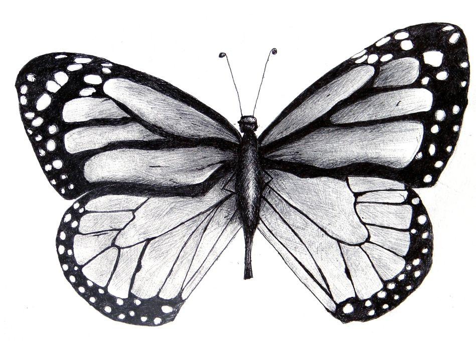 21++ Amazing Black and white butterfly tattoo drawing ideas in 2021