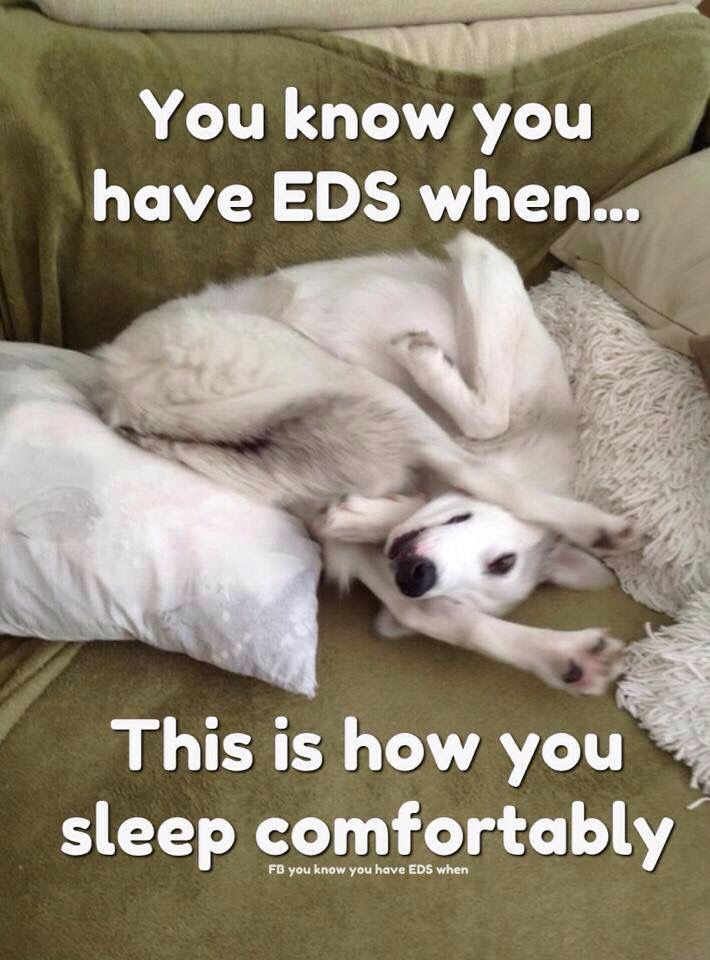 Pin By Tyler Burrell On Eds Dogs Dog Pictures Dog Memes