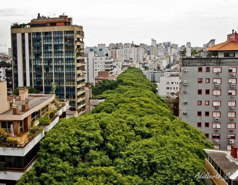 Each-side-of-the-street-is-lined-with-trees,-some-as-tall-as-the-7th-floors-in-adjacent-buildings.