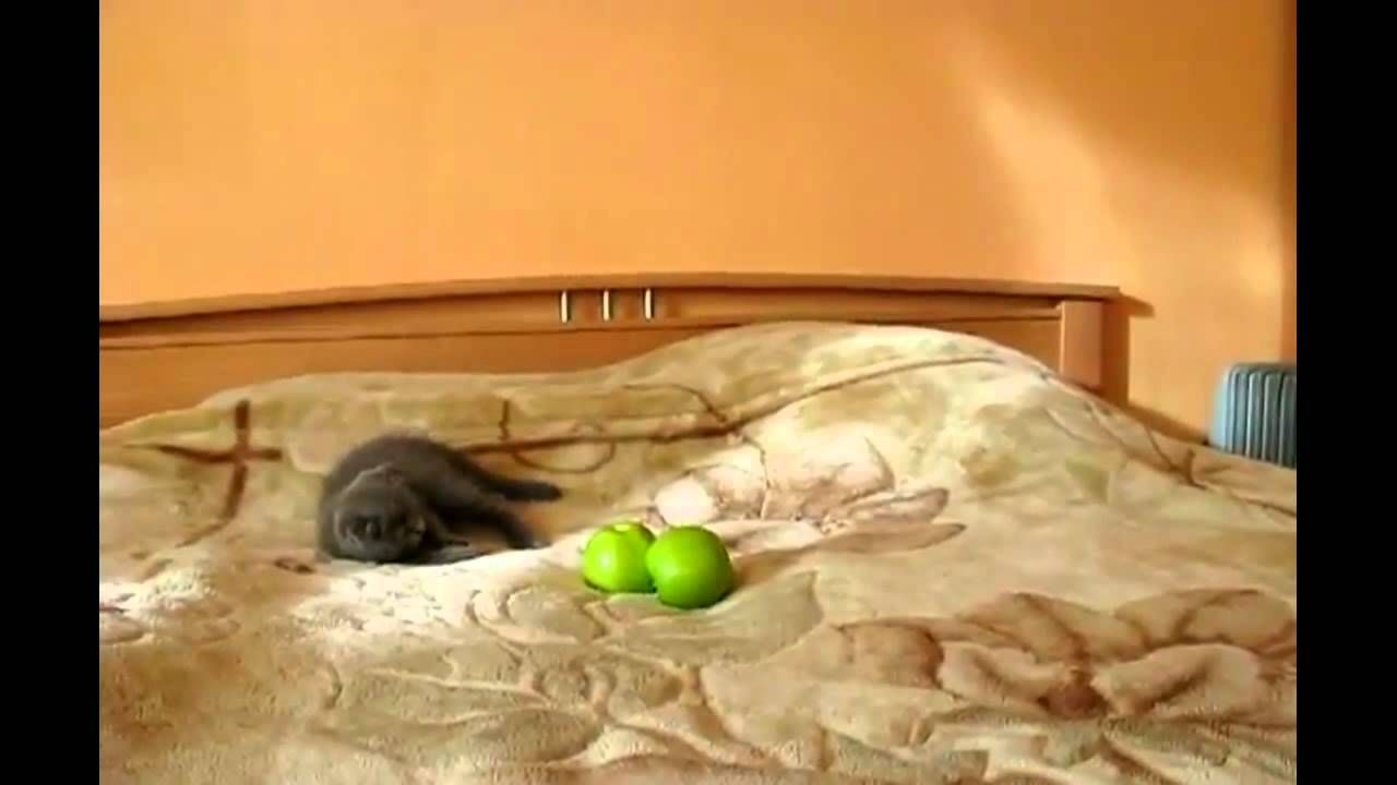 Kitten Vs Two Apples Classic Stuff Lol Love Your Pet Crazy Cats Cute Animals