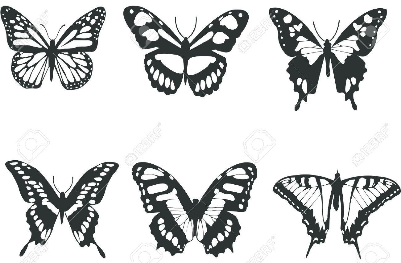 sammlung schwarze und weisse schmetterlinge fur design auf weissem vektor isoliert black butterfly tattoo and white butterflies löwe hund