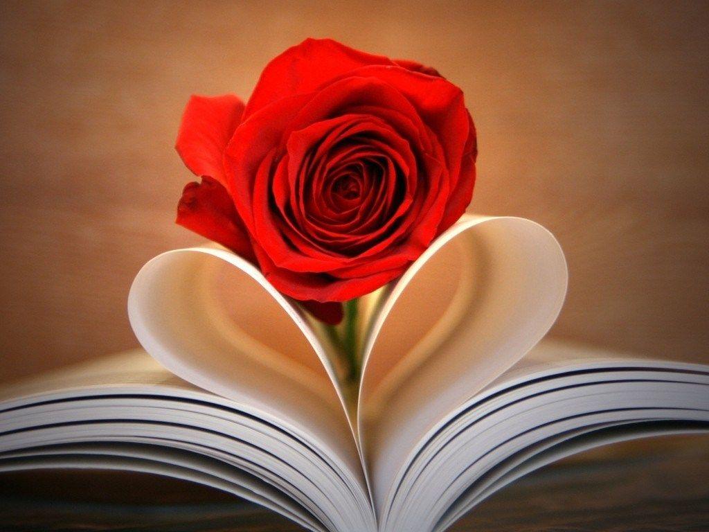خلفيات شاشة رومانسية Romance Wallpaper Hd 1080p Tecnologis Guller Cicek Papatyalar