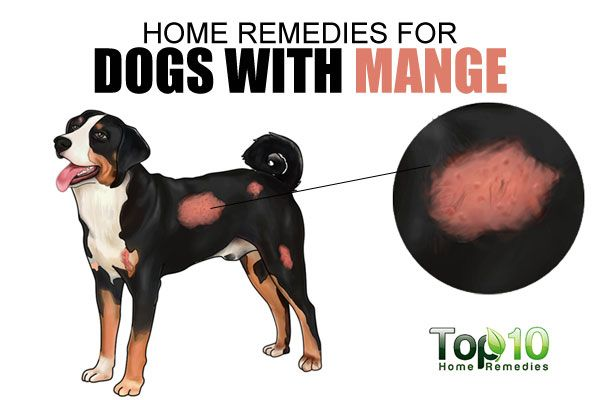 Home Remedies For Dogs With Mange With Images Dog Skin Problem