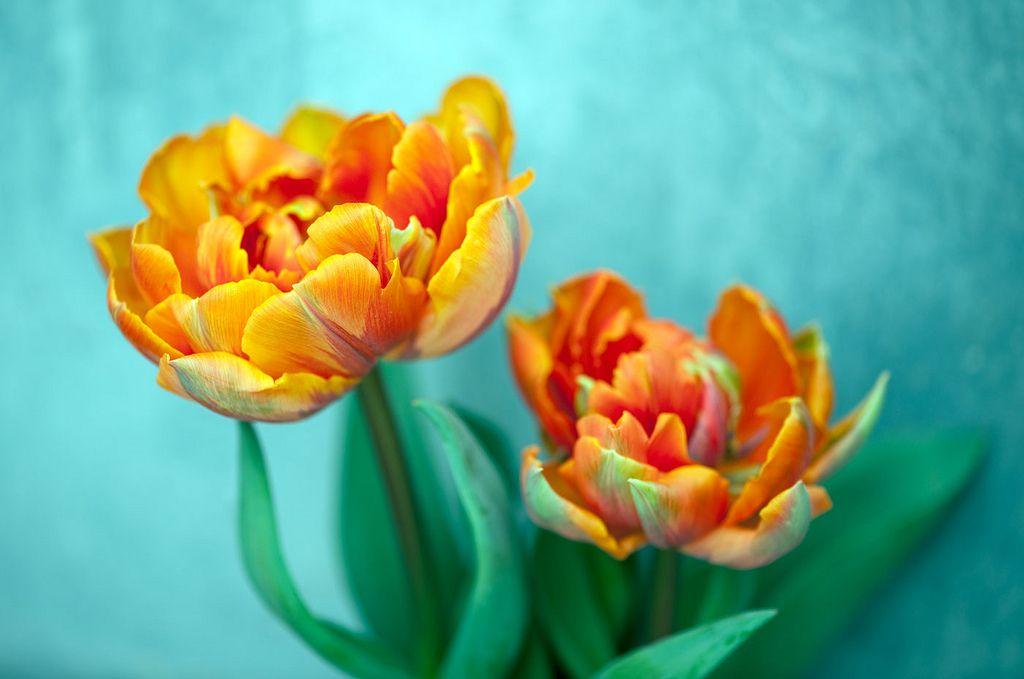 https://flic.kr/p/e54EHt   Strength in vivid colors   Force dans des couleurs vives