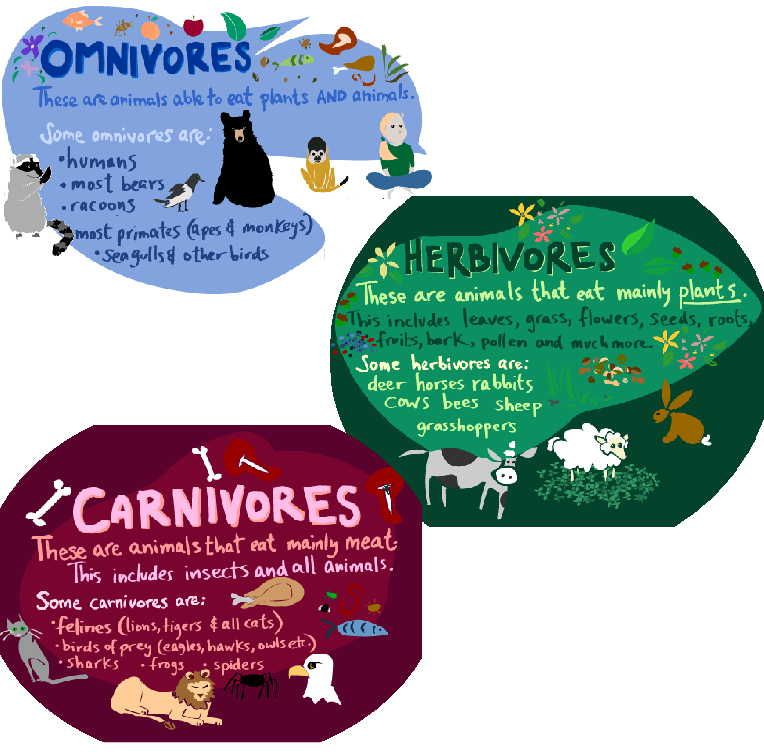 Image result for carnivore omnivore herbivore ks1