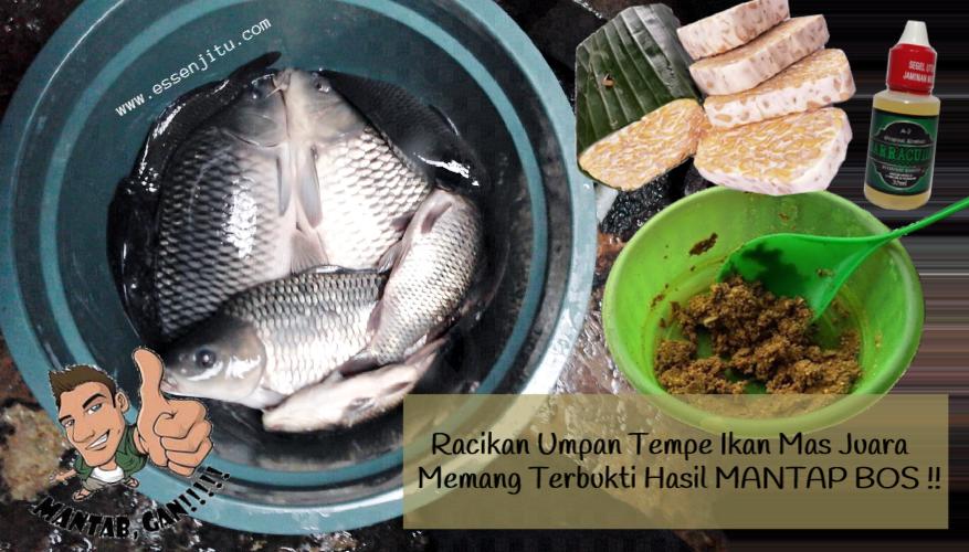 Resep Umpan Tempe Ikan Mas Juara Terbaru Yang Sudah Teruji Ampuh Dengan Tambahan Essen Barracuda Kualitas Premium Dijamin Hasil Pancingan Mant Food Fish Juara