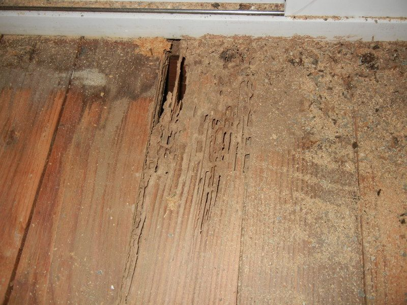 Sketch Of The Easy Methods How To Get Rid The Termites In Your Lovely Furniture Termite Damage Termite Control Flooring