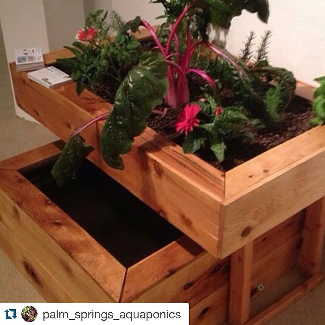 #Repost shoutout to @palm_springs_aquaponics!  Beautiful system! I love the wood. Takes the classy factor up a notch.