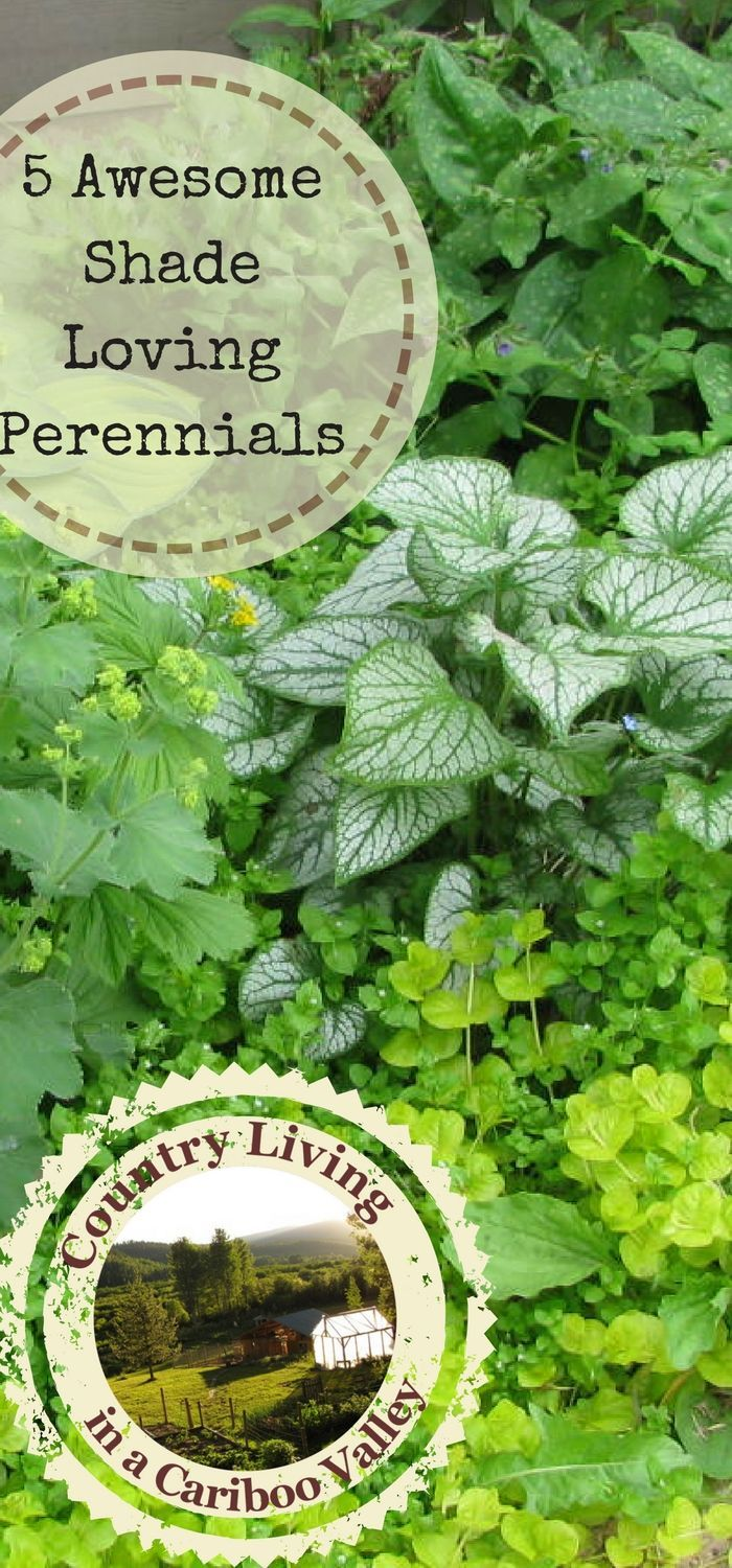 5 Beautiful Shade Loving Perennial Flowers Plant Once And They Come