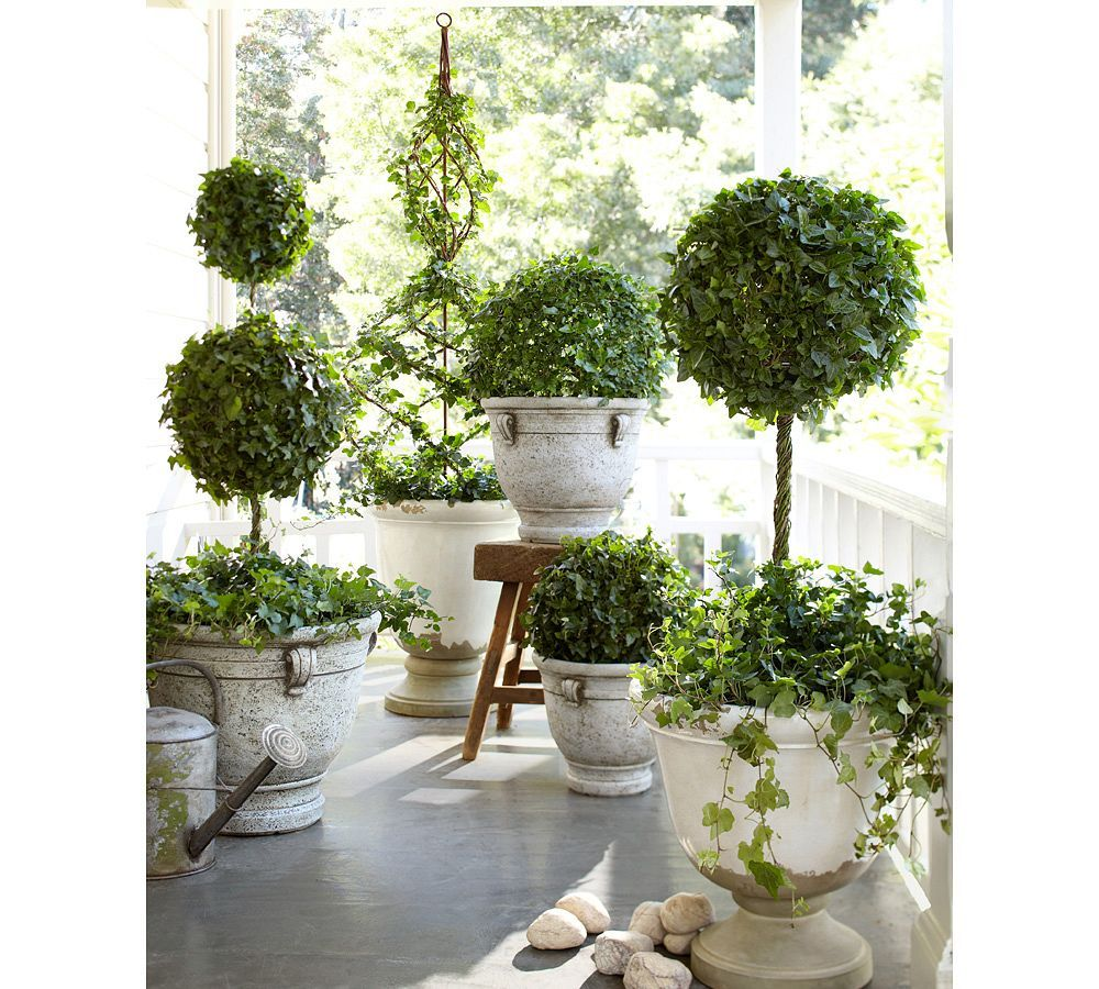 bring Spring to your porch with topiaries... that's where hedera helix  belongs- - Bring Spring To Your Porch With Topiaries... That's Where Hedera