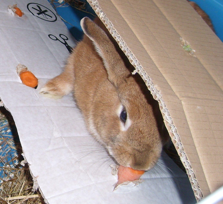Kaninchen Lieben Die Abwechslung Und Brauchen Wie Alle Anderen Haustiere Auch Eine Sinnvolle Beschaftigung Sich Selb Kaninchen Haustiere Kaninchen Spielzeug